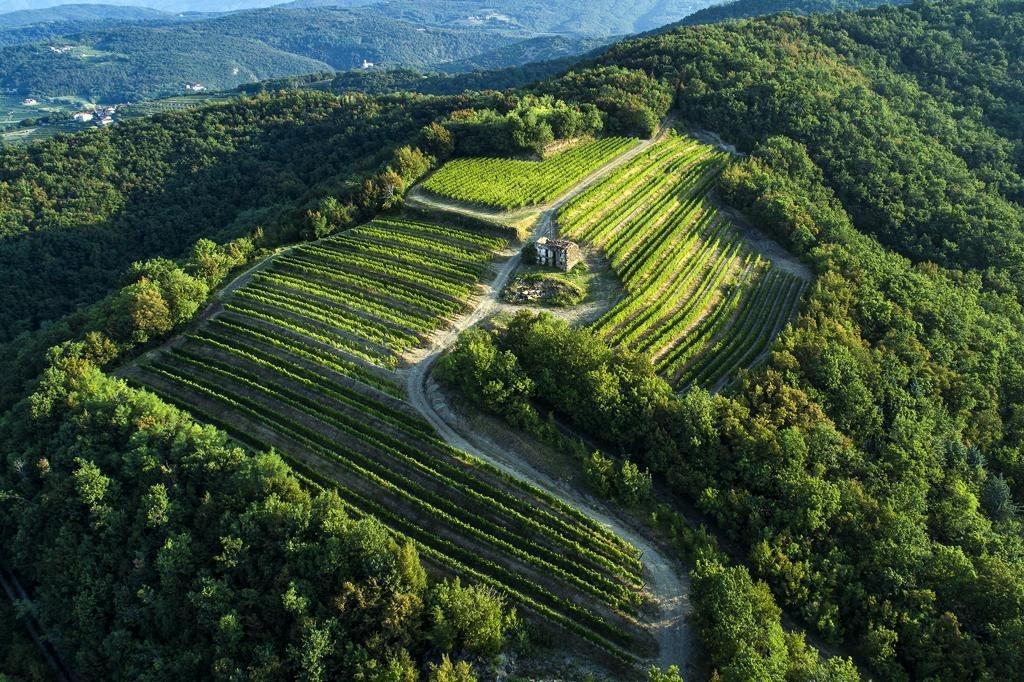 Tenuta La Ponca – Dolegna del Collio (GO) Una viticoltura contemporanea, legata al luogo di origine